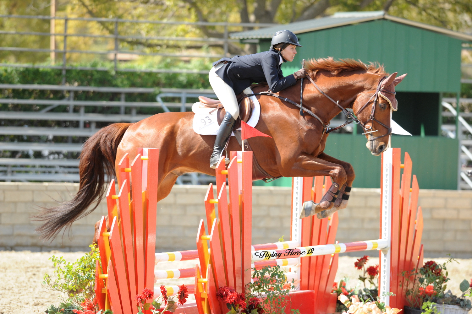 Chestnut Horse Jumping Grand Prix - photo#39