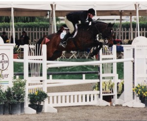 Scott Lico Jumpoing Bay Horse